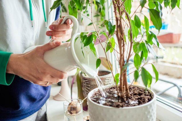 5 мифов о комнатных растениях, которые помогут их погубить