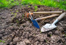 5 способов улучшить состав почвы после урожая картофеля
