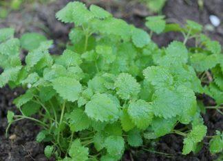 Пряные травы – палитра для гурманов