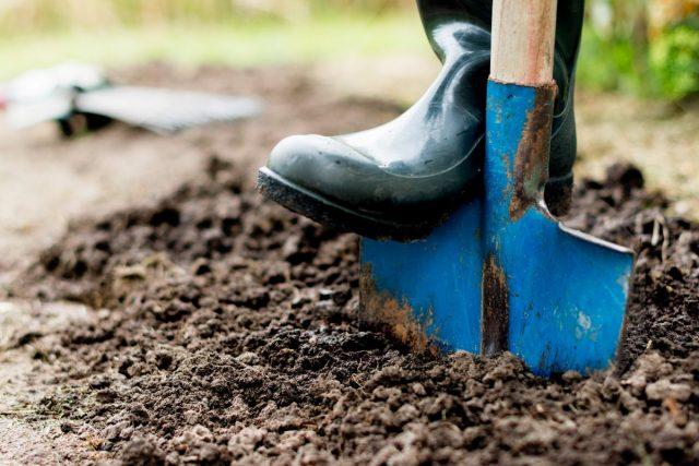 Восстановление биобаланса на участке в конце дачного сезона