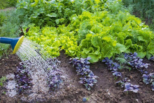 Август — любимый месяц для всех, кто не хочет довольствоваться всего одним урожаем любимых трав