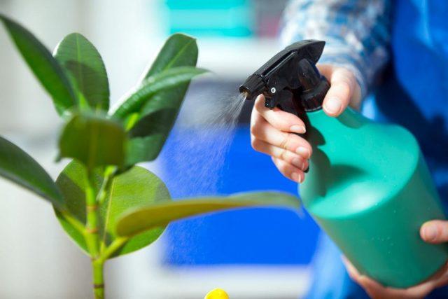 Как избавиться от трипсов на комнатных растениях?
