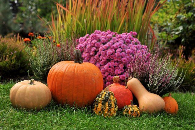 Лунный календарь садовода и огородника на сентябрь 2020