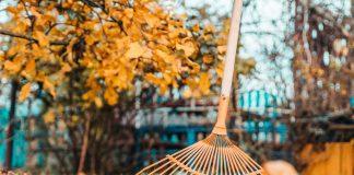 Что не забыть сделать в октябре садоводу?