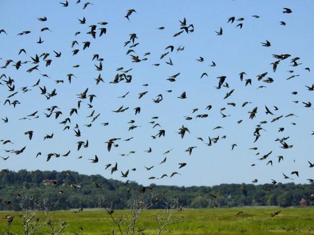 В самом начале сентября начинают улетать на юг ласточки