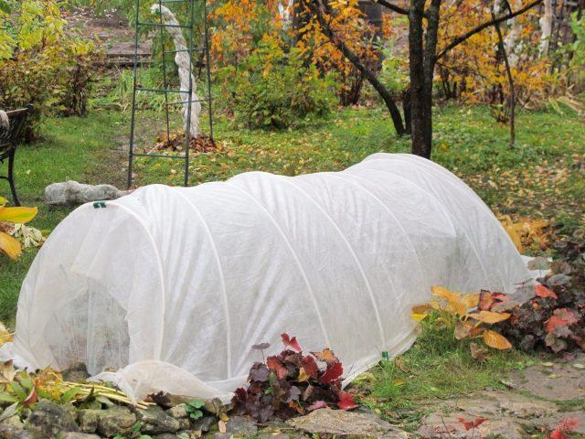 Лунный календарь садовода и огородника на октябрь 2020