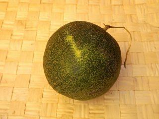 Огурдыня (Cucumis melo), сорт «Мечта Лентяя»