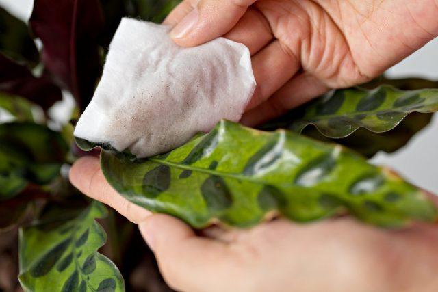 Пыль и грязь — главные враги здоровья растений
