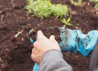 10 неочевидных проблем почвы, снижающих урожай на вашем участке
