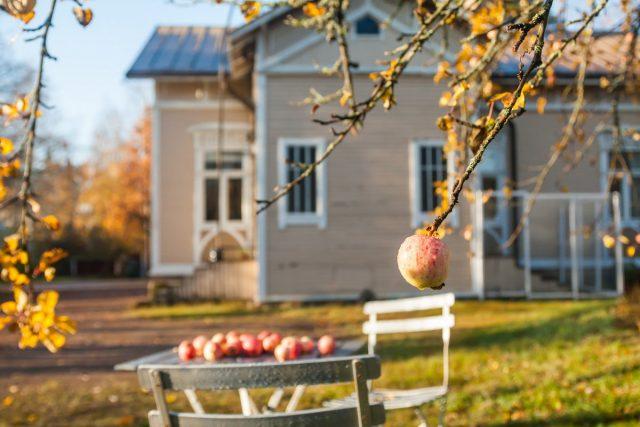 8 главных правил ухода за плодовыми деревьями осенью