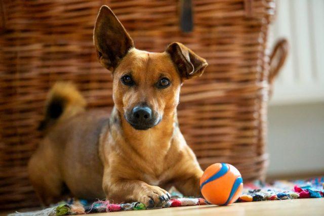 Чем занять собаку дома? 12 идей игр и упражнений для питомца
