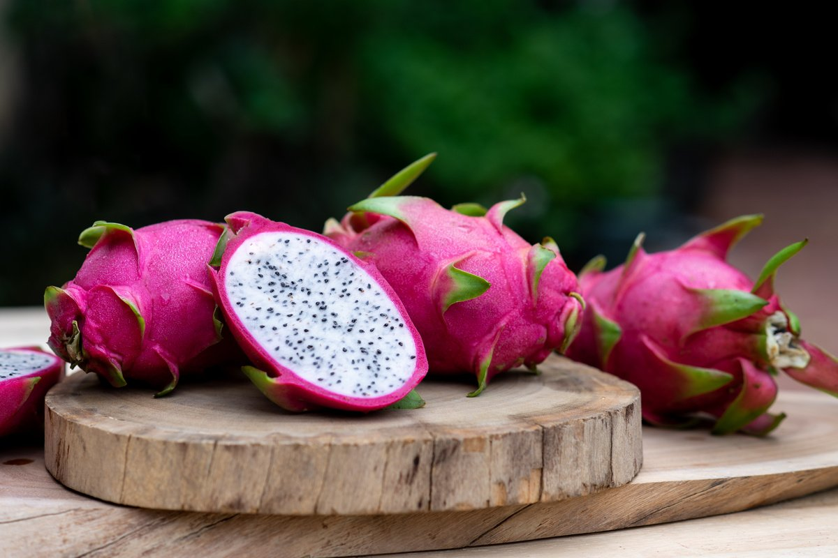 Питахайя — выращиваем гилоцереус из семян