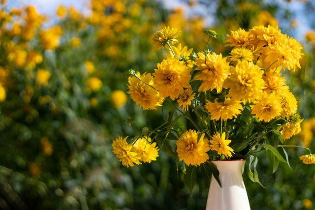 30 лет без ухода — самые стойкие цветы в саду моей бабушки