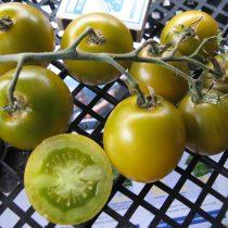 Сорт томата «Зеленый виноград» © Денис Терентьев и Алексей Кулик