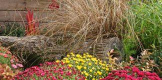 Какие удобрения можно использовать на цветнике осенью?