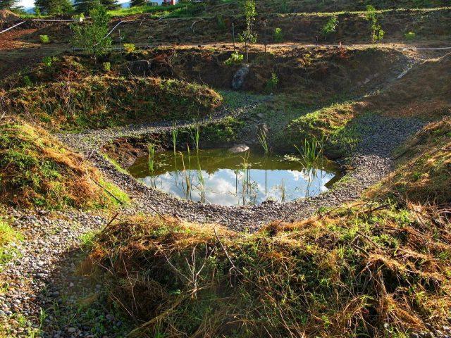 Кратерный сад устраивается на основе котлована