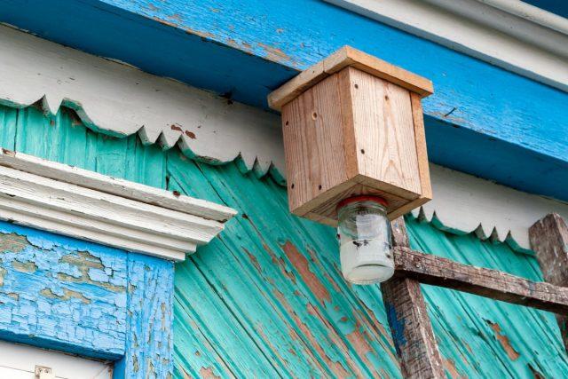 Пчелиная ловушка