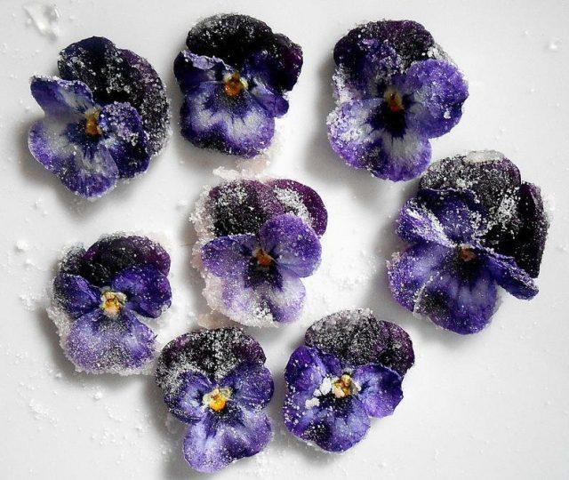 Засахаренные цветки виолы