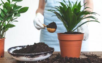 Как пересадить комнатное растение?