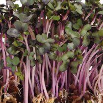 Микрозелень «Краснокочанная капуста»