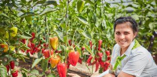 Лучшие перцы для гурманов от агрохолдинга «Поиск»