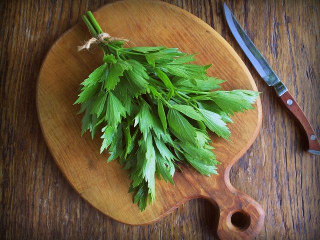 Зелень любистка привлекает своим уникальным ароматом