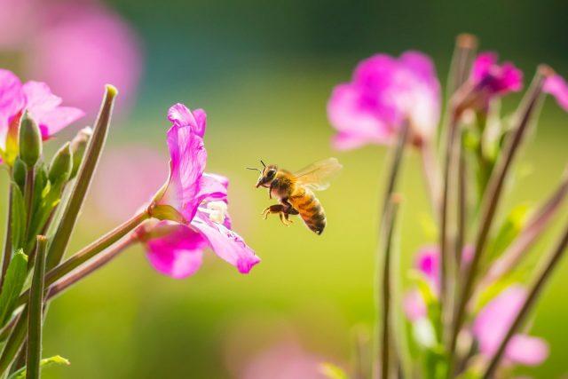 Неполезный для пчёл мёд, или Что едят пчёлы зимой?