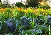 Овощи и цветы на грядке — как сделать огородную жизнь цветущей?
