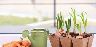 Зимняя выгонка зелени в домашних условиях — витамины без досветки