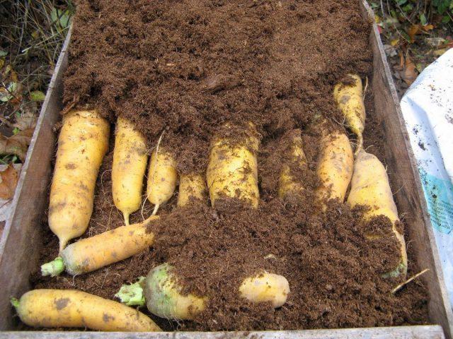 12 природных способов сохранить овощи и фрукты до нового урожая