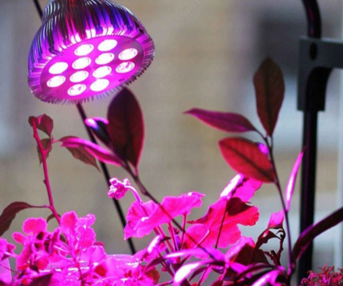 Досветка комнатных растений зимой