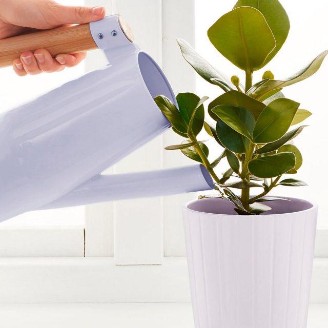 Талая вода для полива комнатных растений