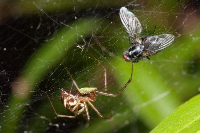 Пауки — реабилитация, или Почему пауки нужны садоводу?
