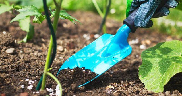 Пролонгированным удобрением очень сложно «перекормить» посадки, так как оно действует дозировано и равномерно
