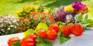 7 причин посеять физалис
