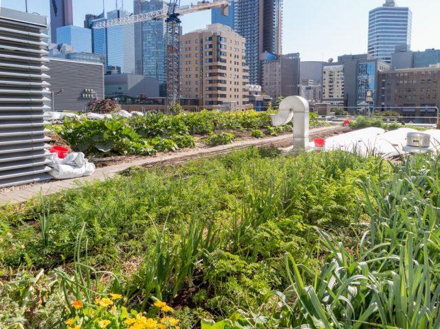 Вариант интенсивного озеленения в большом городе
