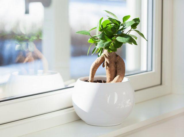 Микрокарпы— растения теплолюбивые
