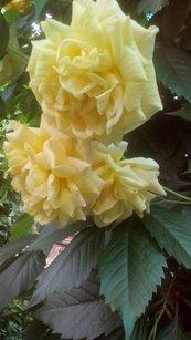 gold-parfyum-ten-s