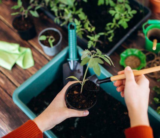 Лунный календарь садовода и огородника на март 2021