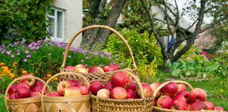 Зачем нам сад? 10 причин, чтобы стать садоводом