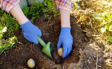 10 способов посадки картофеля