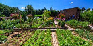 Универсальный календарь обработок сада, огорода и цветника