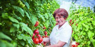 Ранние томаты — как получить урожай в июне?