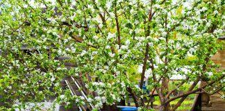 Комплексная защита сада с весны до урожая
