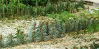 Что такое школка для растений и как её обустроить?