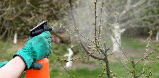 Экологичная весенняя обработка плодового сада