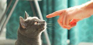 Гипоаллергенные животные для людей склонных к аллергии
