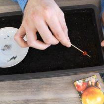 Посейте семена в землю при помощи шпажки