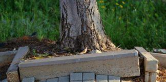 Корни деревьев и повреждения фундамента, дорожек, водопровода