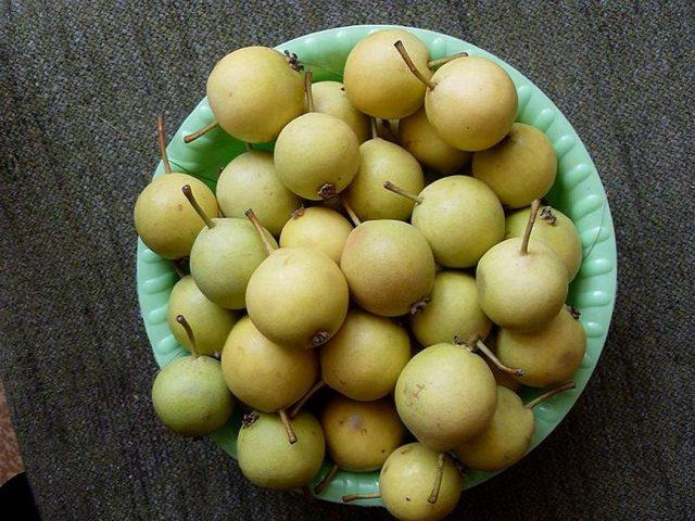 Плоды груши уссурийской